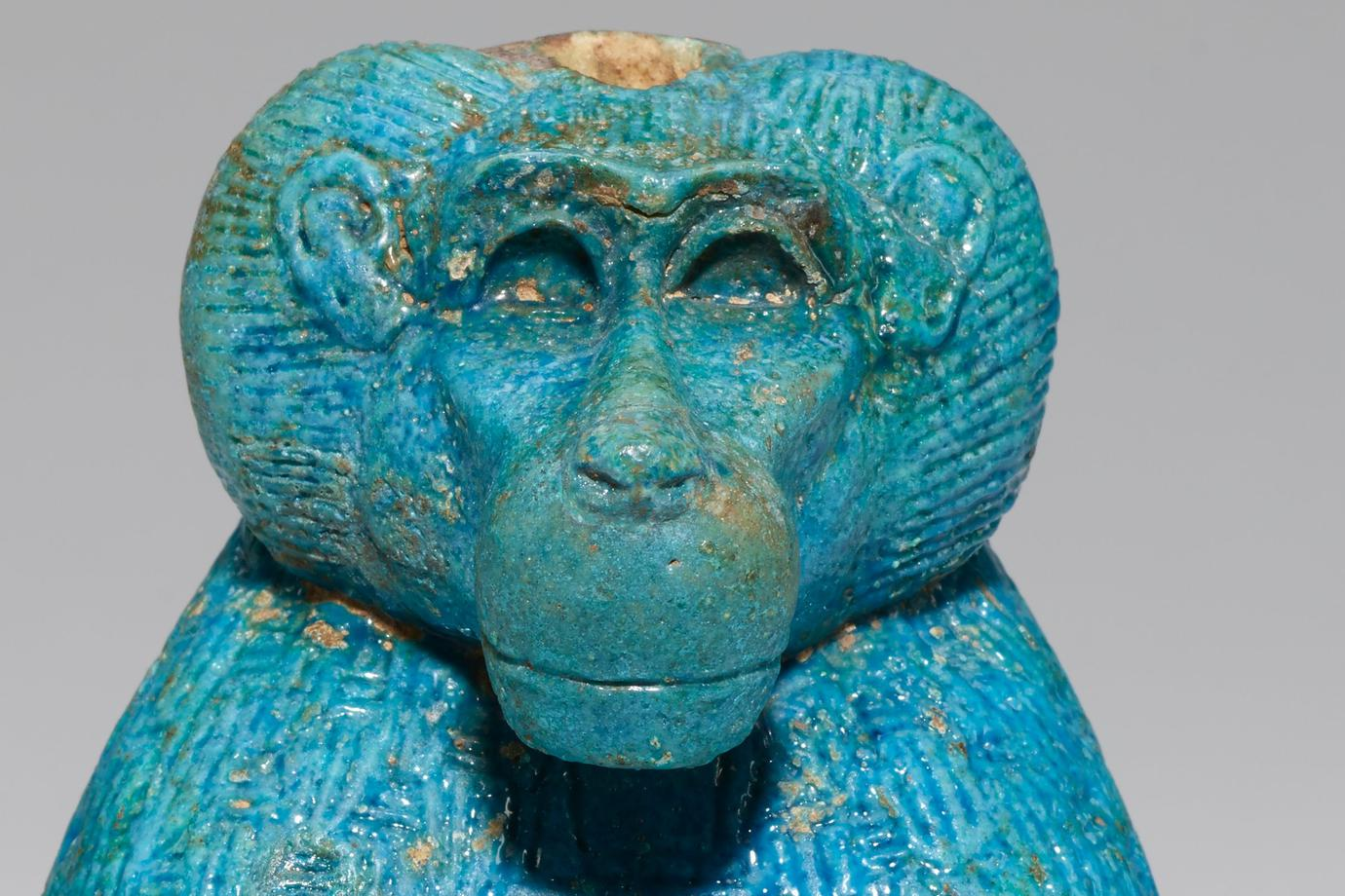 seated male baboon with its front paws on its knees and its tail wrapped along the PR side of its body; turquoise blue